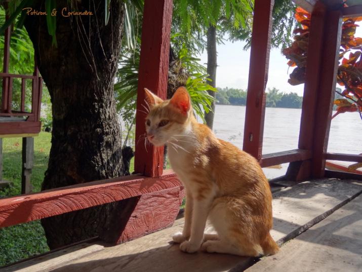 Petit chat a Dondet