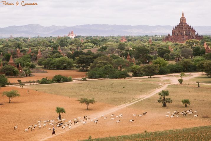 Bagan (20)